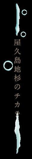 屋久島地杉のチカラ