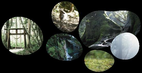 屋久島地杉のメージ画像